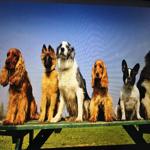 Doggie Dates