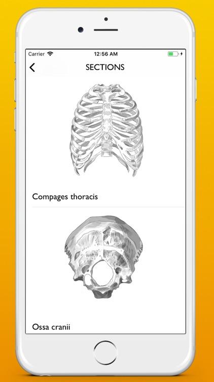 Osteology screenshot-5