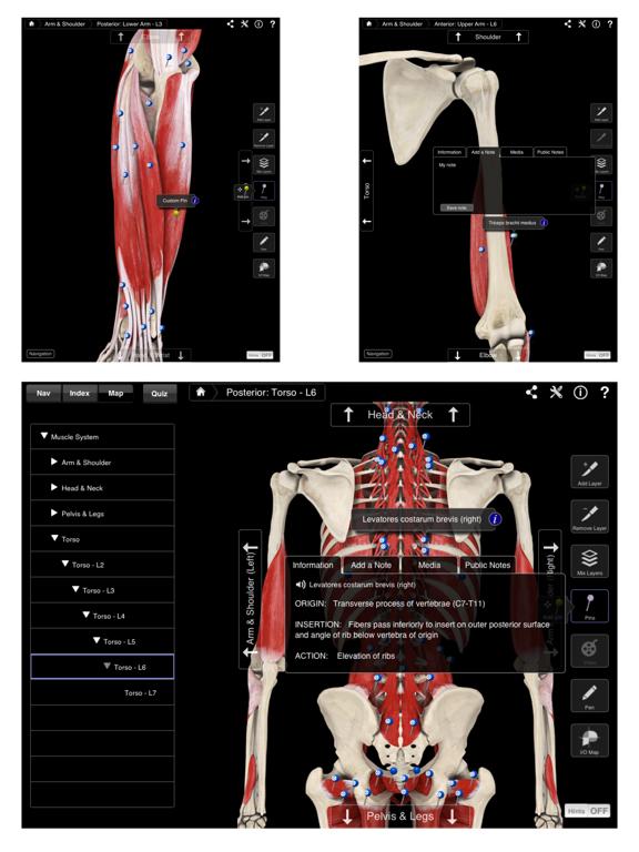 Muscle System Pro III Screenshot 4