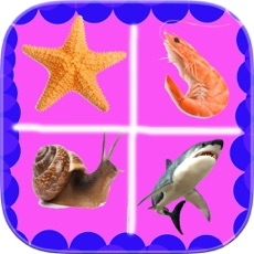 Activities of Quiz Games Aquatic Animals