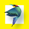 Phuong Bui - Bird Identification artwork