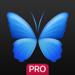 Everpix Pro - HD Wallpapers