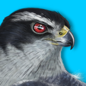 Ibird Plus Guide To Birds app review