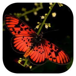 Woodhall's Butterflies RSA