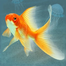 Activities of Aquarium for real fish