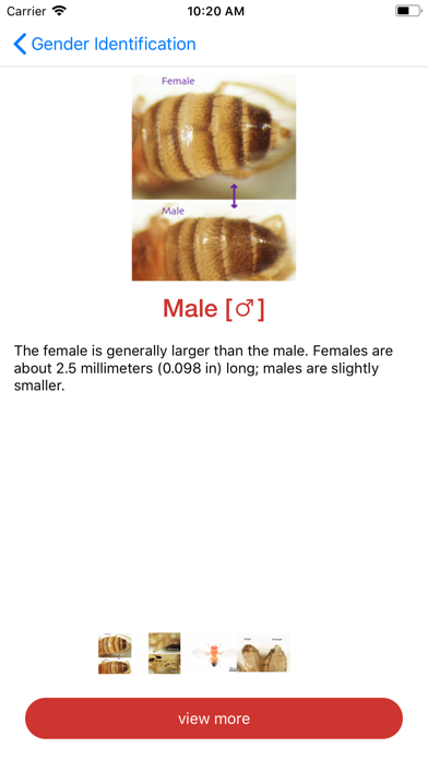 Drosophila screenshot one