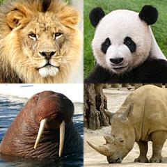 Animaux: Mammifères et oiseaux