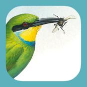 Sasol Ebirds app review