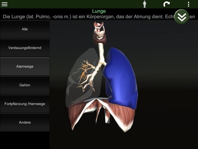 Inneren Organe 3D (Anatomie) im App Store