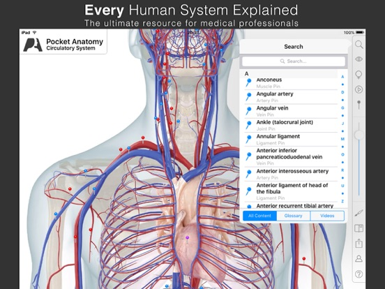 Pocket Anatomy. Screenshot