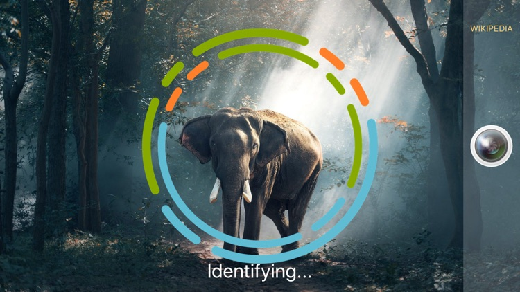 AnimalSnap - Animal Identifier