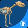 EasyAnatomy: 3D Canine Anatomy - LlamaZOO Interactive Inc.