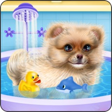 Activities of Pomeranian Puppy Day Care