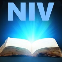 NIV Bible* - New International