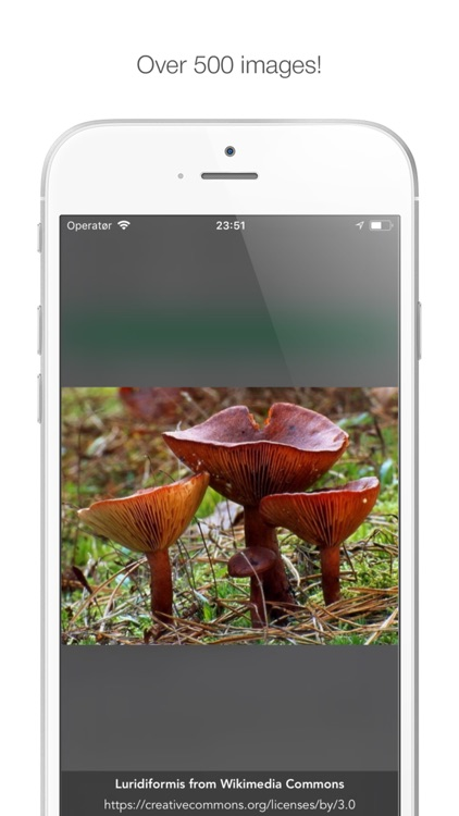 Mushy: Complete Mushroom Guide screenshot-9