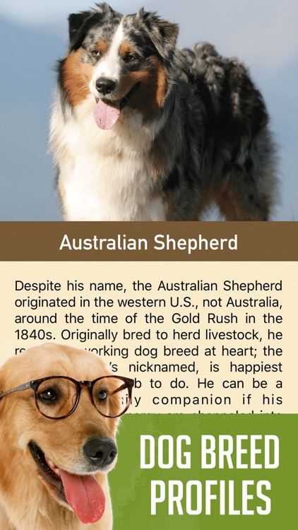 DogSnap - Dog Breed Identifier screenshot-3