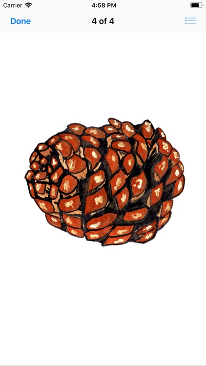 Pine Cone Stickers screenshot-4