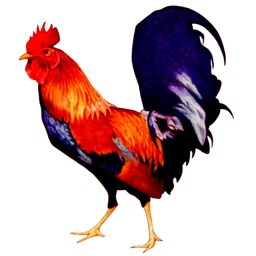 RoosterAlarm