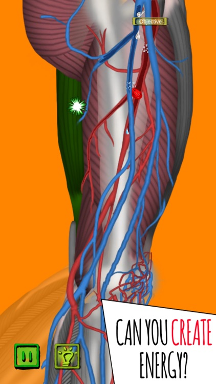 Inside The Human Body PREMIUM screenshot-5