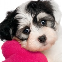 Codes for Cute Puppy Jigsaw Puzzle Games Hack