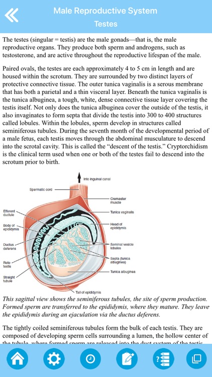 Male Reproductive System screenshot-7