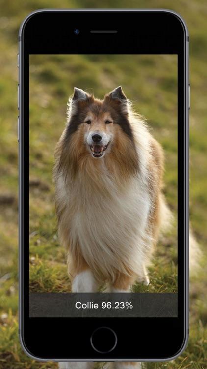 Dog Identify-Breed Identifier screenshot-4