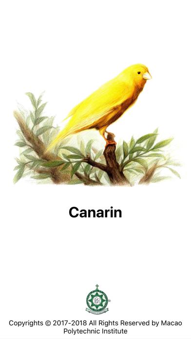 Canarin