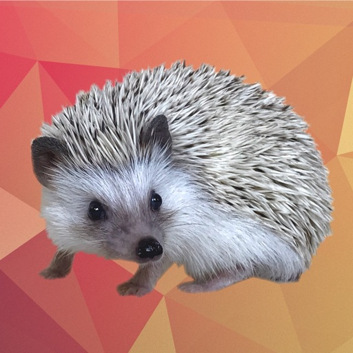 Quill the Hedgehog