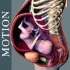 Pregnancy Motion Anatomy