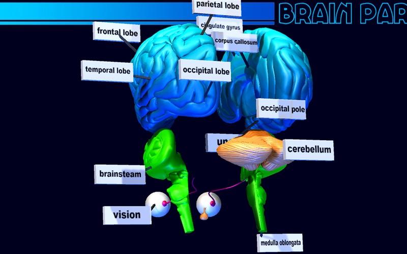 Brain Parts 3D скриншот программы 4