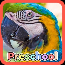 Activities of Wild Animal Preschool Games