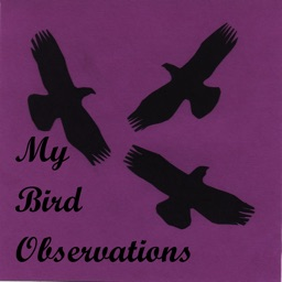 My Bird Observations