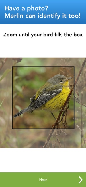 Merlin bird id by cornell lab on the app store fandeluxe Image collections