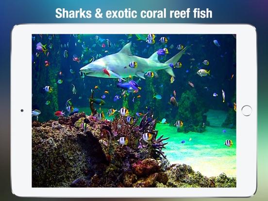 Screenshot #4 for Aquarium Live HD