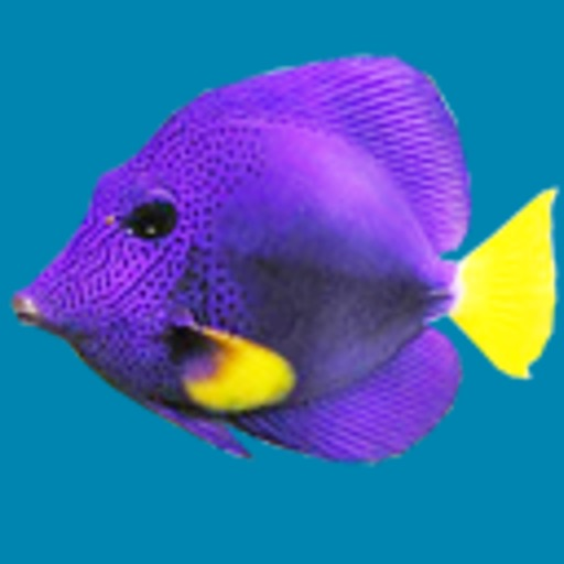 Somethin Fishy