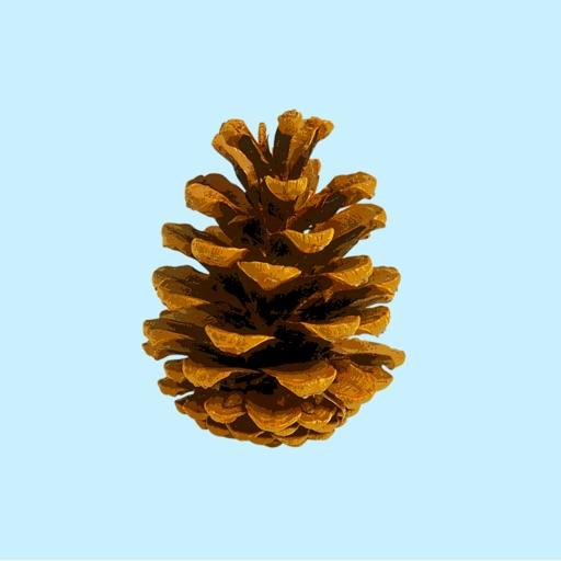 Pine Cone Stickers