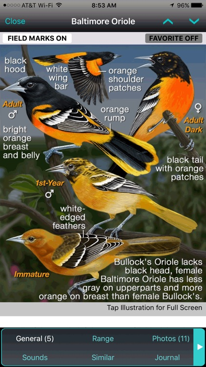 iBird Yard+ Guide to Birds