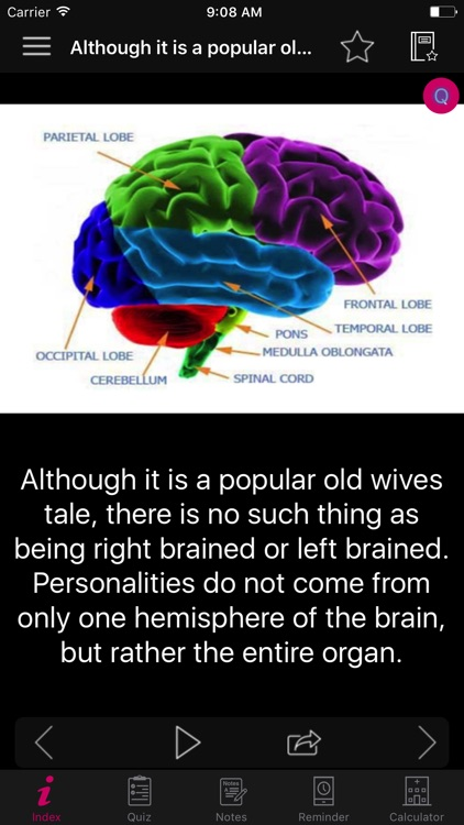 Human Brain Facts & Quiz 2000