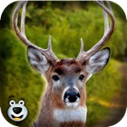 -森林のシカのハンター大きな降圧撮影サファリ楽しいゲームをプレイします。 icon