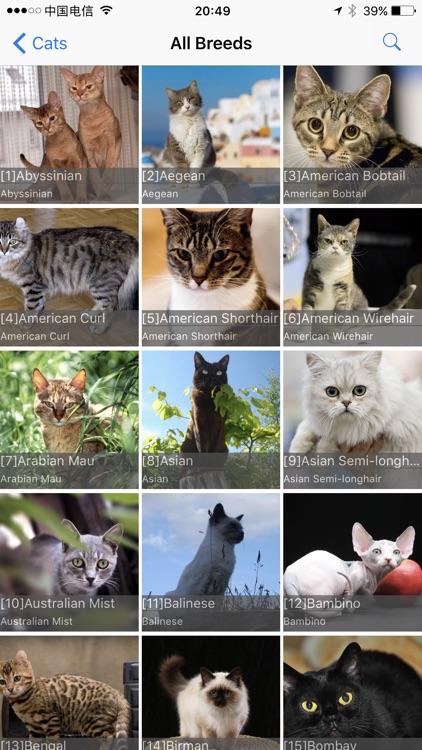 Cats Bible