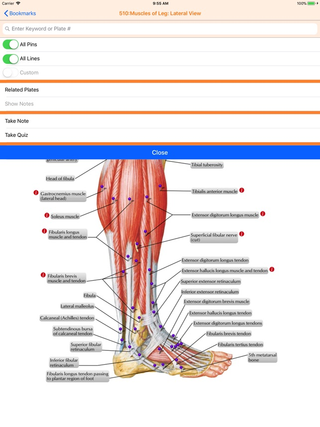 Netters Anatomy Atlas 7e On The App Store