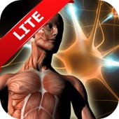Human Anatomy Atlas (HD image)