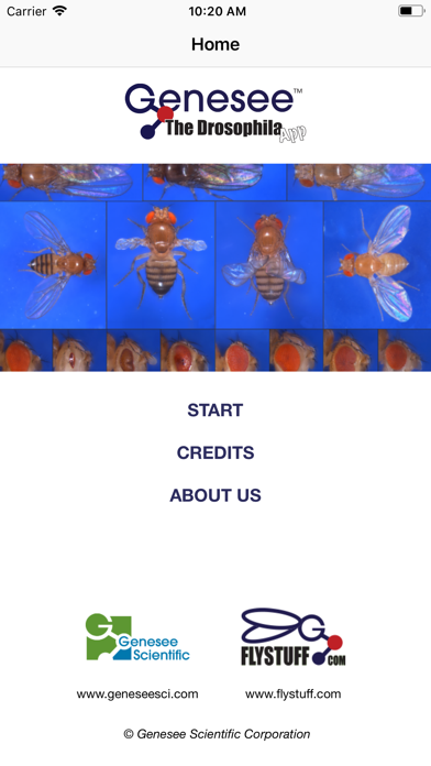 Drosophila screenshot three
