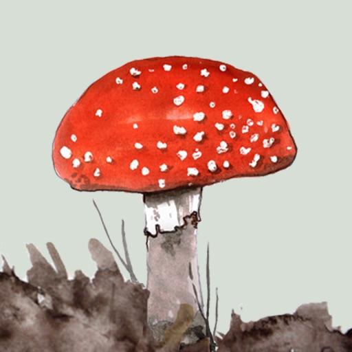 Mushrooms & other Fungi UK