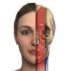 Interactive Anatomy - BG