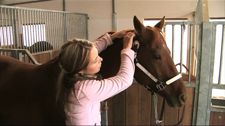 Equine Acupressure screenshot-3