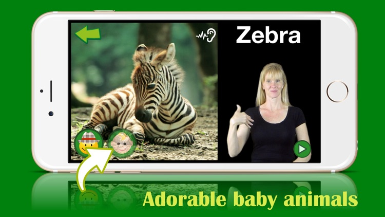 ASL Animals - Lite screenshot-4