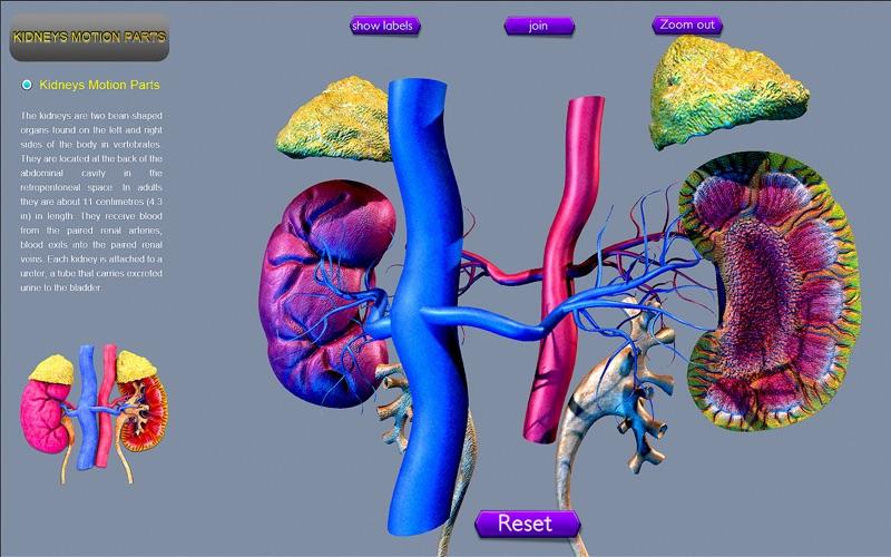 Kidney Motion скриншот программы 4