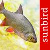 Fish Id - Freshwater Fish UK
