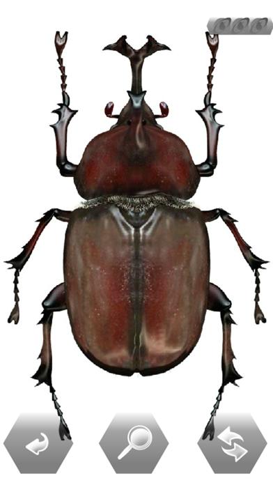 世界の昆虫採集のおすすめ画像3